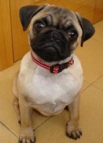 cute-dog-red-collar