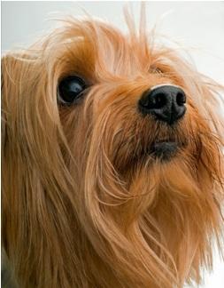 Dog great hair